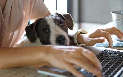 Person working remotely with dog